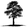 tree_icons_oak